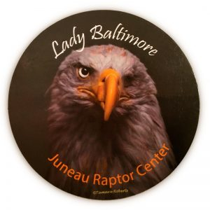 Lady Baltimore Magnet